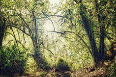Les Amazones Photograph  - Les Amazones Fine Art Print