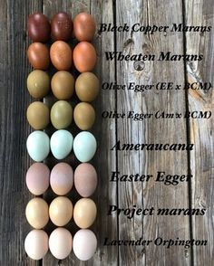 I have some new followers who may not know which breeds lay which color eggs, so I made one of these again with this weeks eggs 😁. I'm…