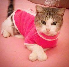 #şeker#cat#kedi#kitty# Yasemin Aksu