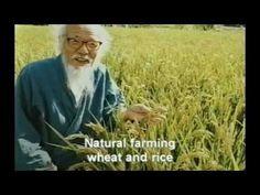 Masanobu Fukuoka - Rice Super-Croping Techniques