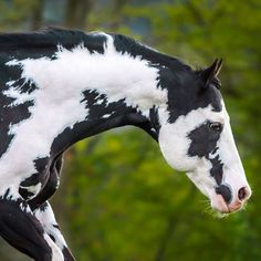 I can feel my hand running down his beautiful neck ! Horses And Dogs, Cute Horses, Horse Love, All The Pretty Horses, Beautiful Horses, Animals Beautiful, American Paint Horse, Horse Photos, Horse Pictures