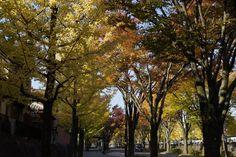 洛西ニュータウンの紅葉