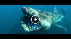 5 suoni misteriosi registrati nelle profondità del mare #suoni #misteriosi #mare #oceano #IncredibileWeb