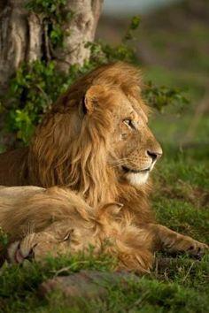 Africa Mara, Masai Mara Game Reserve, Kenya by thelma