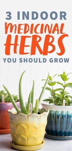 Intimidated by the idea of diving into herbalism? Here are three common plants you can pick up today that are a great entry point into herbal medicine. They grow great in containers, so you don't even need a yard! #aloevera #lemonbalm #peppermint #medicinalherbs #herbalmedicine #herbalism #indoorplants #wholefully