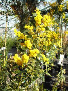 Le Mimosa, Julien, Cottage, Fruit, Plants, Flowers, Cottages, Plant, Cabin