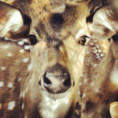 Bambi ? Shot by: Alex Sindalovsky instagram: @acedzn