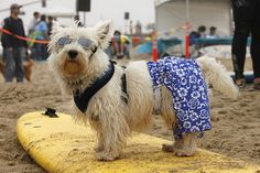 Surf City Surf Dog 2010 by si gross, via Flickr