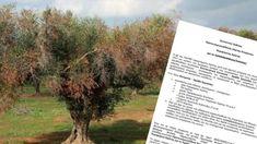 Πως θα γλιτώσουν οι ελιές της Κρήτης από τον...Xylella ! | Cretalive ειδήσεις Lettering, Drawing Letters, Brush Lettering