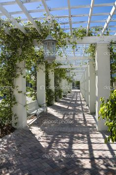 pergola walkway