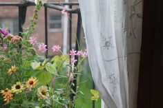 To grow a garden as gorgeous as this woman's fire escape.  That is my aim.  Check out Amy Merrick's blog An Apple a Day