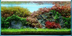 Aquarium Design, Aquarium Ideas, Tank I, Planted Aquarium, Plantar, Underwater World, Diorama, Fresh Water, Aquascaping
