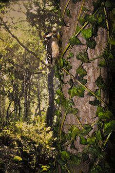 Particolare del diorama dedicato alle foreste della Sardegna.  Museo zoologico Università di Cagliari
