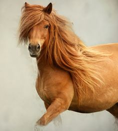 Amazing horse photography.
