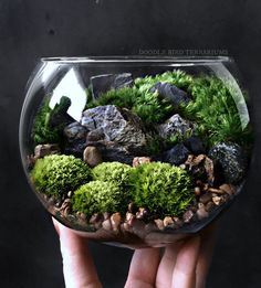 The bio-bowl Forest World terrarium series is comprised of crystal clear, high quality glass bowls showcasing a miniature landscape of ferns, More