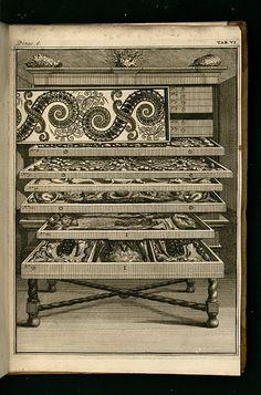 """Engraving from Vincent Levinus's 1715 """"Wondertooneel der Nature"""" Cabinet of Curiosities in the Eighteenth Century"""