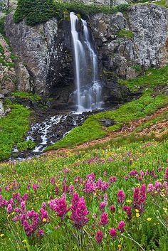Waterfall and Wildflowers - Porphyry Basin, San Juan National Forest near Silverton, Colorado