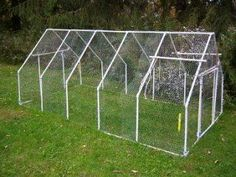 """PVC chicken tractors 