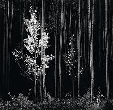"""ANSEL ADAMS """"When people ask what equipment I use, I tell them my eyes."""""""