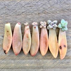 An indepth guide in how to propagate your succulents successfully. Succulent City prides itself in their experts on the succulent plants and propagation.
