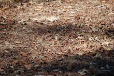 Image detail for -See more animal camouflage and plant camouflage .