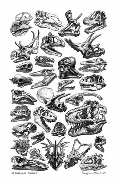 Dinosaur skulls! On a poster! Mailed straight to you! Get them while they last: http://www.finneganmatthews.com/prints/31-dinosaur-skulls Finn Matthews Illustration