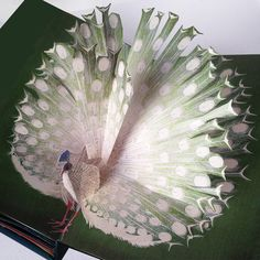Pop Up Birds Book by Chiara Bianchini