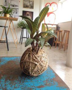 Unique Kokedama Ball Ideas for Hanging Garden Plants