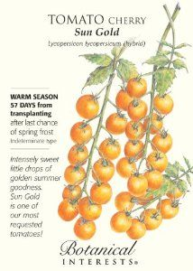 Tomato Cherry Sun Gold Seed by Botanical Interests. $3.49. 40 milligram seed package. Starts to ripen in 57 days. Plants 8 plants (after thinning). Lycopersicon lycopersicum. Very sweet cherry tomato, orange in color. The Sun Gold Cherry Tomato is a very popular and variety that has a unique, yet very sweet flavor. Small fruits grow to about 1 inch in diameter and start to ripen within 57 days. The seed comes in a 40 milligram seed package, which is enough for about 8 plants af...