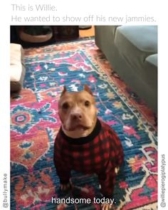 Pitbull Excited for New Jammies - Cutest Baby Animals Funny Animal Memes, Funny Animal Videos, Cute Funny Animals, Cute Baby Animals, Animals And Pets, Cute Puppies, Cute Dogs, Big Dogs, Belle Image Nature