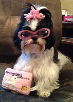 Diva Dog OMG SOOOOO CUTE!
