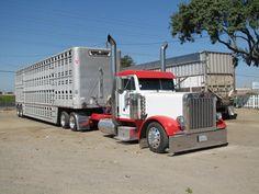 ~Bullboy~ Cattle Haulers  Cowhauler