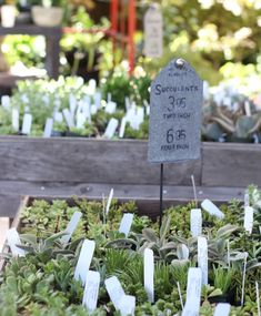 succulents at the nursery   from gardenista