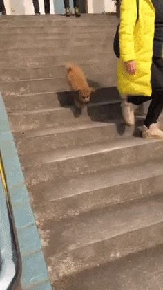This dog runs down the stairs on two feet. Cute Funny Animals, Funny Animal Pictures, Funny Cute, Funny Dogs, Hilarious, Animals And Pets, Baby Animals, Cute Puppies, Cute Dogs