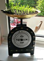 Urban Gardening - ein paar Inspirationen für den Gartenbalkon