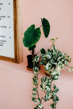 Menu Board #indoorplants #interiors