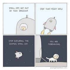 Small cat in space!