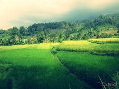 green n yellow