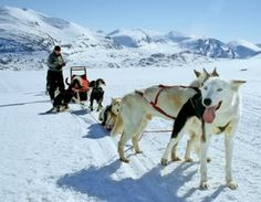 Husky Safari in Lapland.  Activities in Saariselkä http://www.saariselka.com/individual/activities