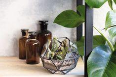 Viete, ktoré rastliny vás doma ochránia pred škodlivými látkami? | Môjdom.sk Terrarium, Home Decor, Terrariums, Decoration Home, Room Decor, Home Interior Design, Home Decoration, Interior Design