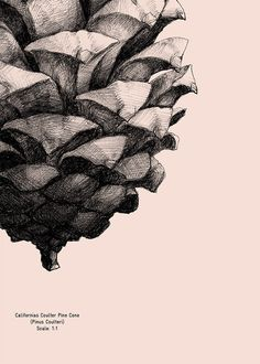 Pine cone poster Form us with love
