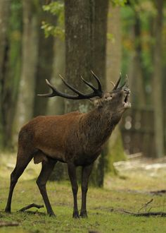 Moose Deer, Monster Art, Big Game, Beast, Exotic, Wildlife, Creatures, Culture, Tattoo