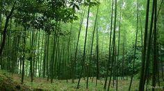Hiraodai, ranked No.10 on TripAdvisor among 129 attractions in Kitakyushu.