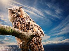 #animal#  #close-up#  #iguana#  #nature#  #reptile#