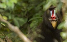 20 top animal encounters - Join an elephant patrol in Indonesia  Wildlife lovers have plenty of reasons to head up to Gunung Leuser, but for many the big draw is the chance to see one of the world's rarest animals, the …