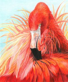 Red Flamingo Painting - Carla Hurt Colored Pencil