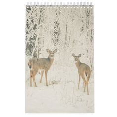 Beautiful White Tailed Deer Calendar - photo gifts cyo photos personalize