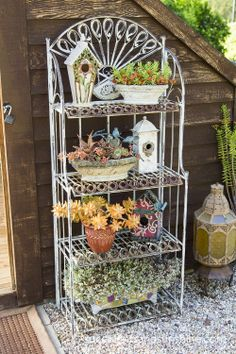Jeanne Meadow's Amazing Succulent Garden Succulent arrangements on shelves at Jeanne Meadow's Garden Succulents In Containers, Cacti And Succulents, Planting Succulents, Container Flowers, Container Plants, Bakers Rack Decorating, Porch Decorating, Outdoor Bakers Rack, Verticle Garden
