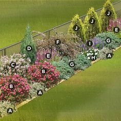 Hide a chain-link fence: north-central plan. Nix multiples; Ilse rose at C; dogwood instead of left-B; milkweed instead of right-B; Mermaid clematis + Blood Brothers grass at D (+grass at mid-J); Bee balm at right-J; Salmon Star lily at left-E; Iris in front of F; dahlia Cafe Au Lait at I; Echinacea at right-E; Dianthus at mid-A, H, + front of E; Sedum at left-A + right-A; Pancake arborvitae instead of left-G; Yarrow at right-G. Spring bulbs?