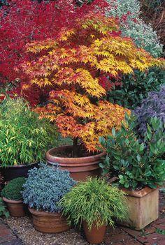 Japanese Garden Backyard, Japanese Garden Landscape, Small Japanese Garden, Mini Zen Garden, Japan Garden, Japanese Garden Design, Garden Pots, Japanese Gardens, Vegetable Garden